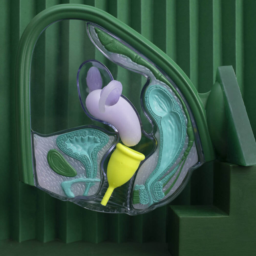 Uterus model showing menstrual cup inside